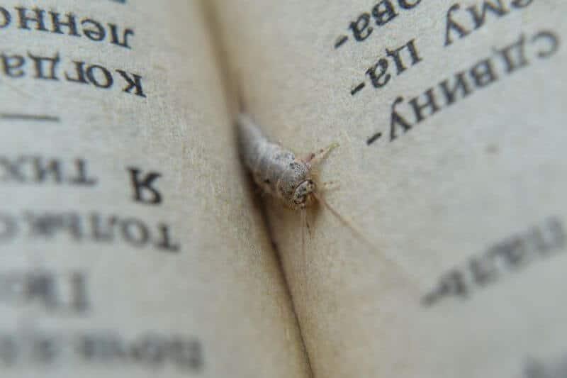Pest-control-cape-town-book-min