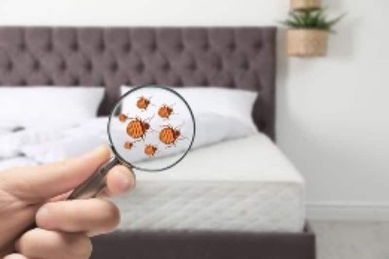 pest-control-cape-town-magnifying-glass-fleas-min